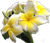 plumeria polycystic kidney disease blood pressure pkd pld polycystic liver disease